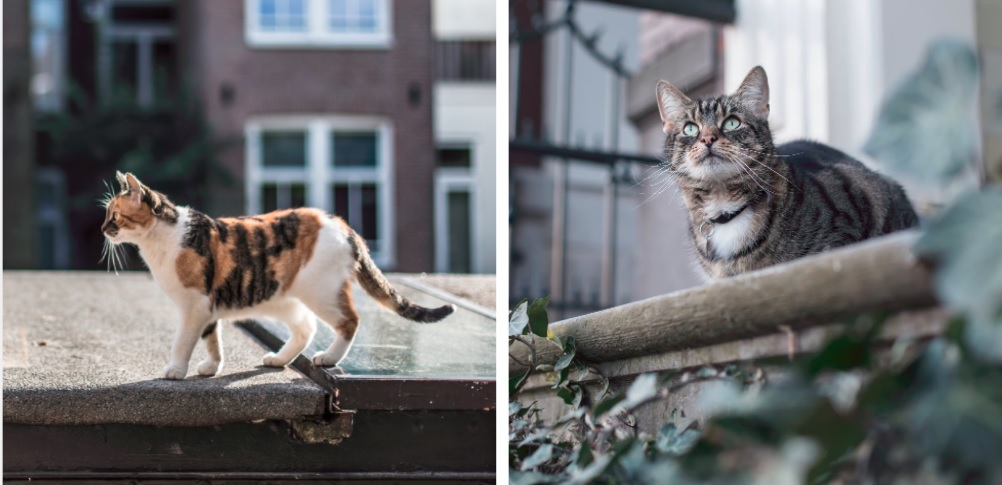 "Two photos of cats for the readers to look at and say ""aawwww"""
